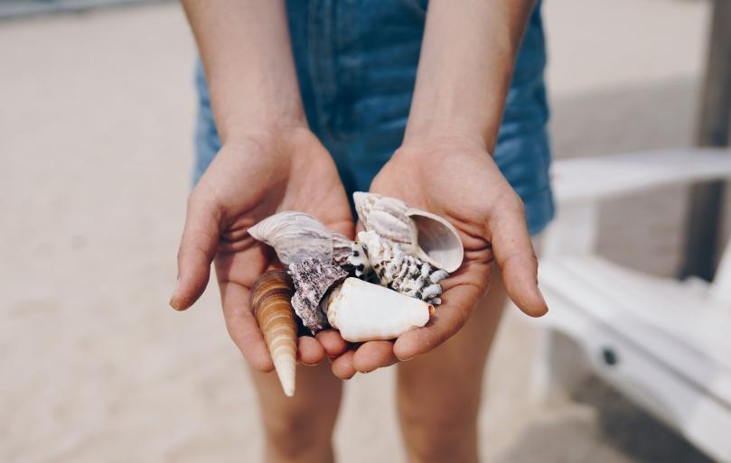handful-of-shells_4460x4460.jpg